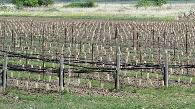 Coyote's Run Winery
