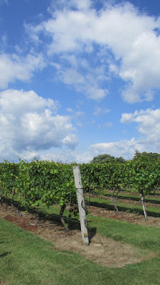 Quai du Vin Winery Vineyards