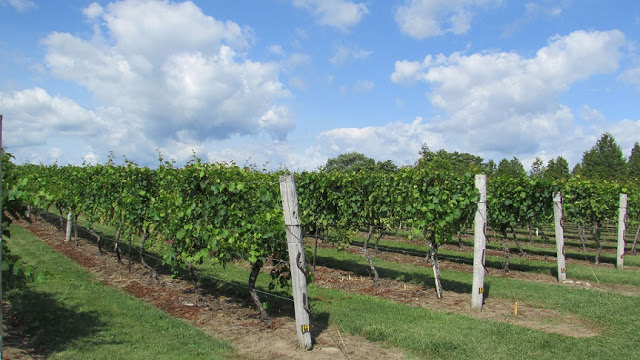 Vineyards at Quai du Vin Estate Winery