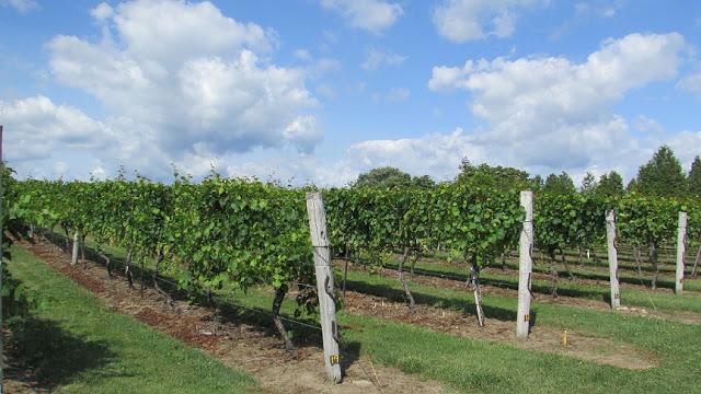 Vineyards at Quai du Vin Estate Winery